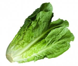 The white stem of romaine lettuce and cabbage leaves will grow roots and make a new plant