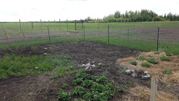 Owl Creek Farm 2021 Garden - Weeding